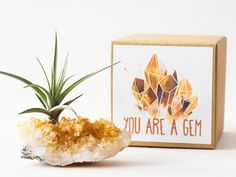 19 cute summer home buys we're buying ASAP: Citrine crystal air plant holder Best Friend Gifts, Gifts For Friends, Gifts For Mom, Diy Gifts, Minimalism Living, Long Distance Gifts, Realtor Gifts, Citrine Crystal, Client Gifts