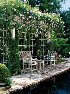 Pergola  covered with Jasmine And Rose. - ultimatechristoph.com