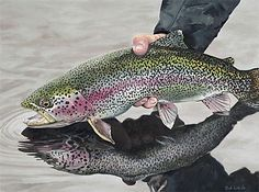 A rainbow trout is my favorite kind of fish to catch. A rainbow trout is m Bass Fishing Tips, Fishing Life, Gone Fishing, Best Fishing, Kayak Fishing, Fishing Stuff, Fishing Knots, Sport Fishing, Fishing Reels