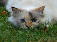 Ida hiding in the grass