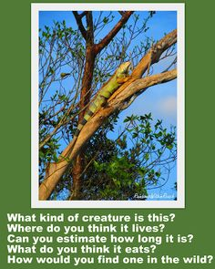 Photo picture prompts to encourage creative writing. (Free ebook coming soon!)