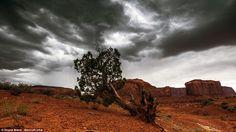 An upturned tree against a stormy sky in Arizona taken in 2013...
