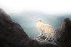 Wanderer above the Sea of Fog by Alicja Zmysłowska on 500px