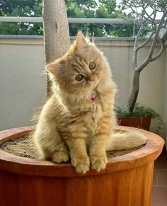 Life with cats Pretty Animals, Cute Little Animals, Pretty Cats, Beautiful Cats, Funny Cats And Dogs, Cute Cats And Kittens, Baby Cats, Kittens Cutest, Cat Aesthetic