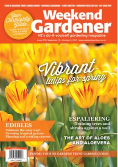 ON SALE NOW! Top-tips for getting vibrant tulips for in your spring garden!