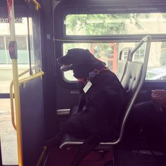 Independent Pup Has Her Own Bus Pass so She Can Go to the Park