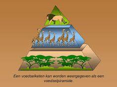 voedselketen Afrika