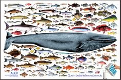 ablv/ baleia - anúncio - pedro corbett