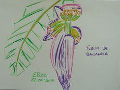 Fleur de bananier #dessin aux crayons feutres http://www.pigmentropie.fr