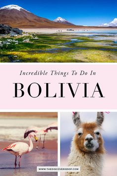 The best things to do in Bolivia. Don't miss out on these fabulous Bolivia travel hotspots - including the Bolivia Salt Flats, La Paz, Sucre, Copacabana, Lake Titicaca and more. Here's why Bolivia should be at the top of your South America bucket list #traveldestinations #southamerica #bucketlist #bolivia #traveldestinations #travel