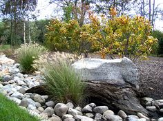 landscaping with winterberry - Google Search