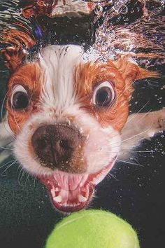 Underwater Puppies By Seth Casteel - Urban Outfitters