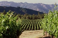 The Ultimate Guide: Planning a Girls Weekend in Wine Country