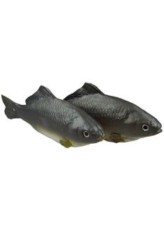 Pack of 2 Grey Artificial Common Carp Lifelike and Realtouch PU Fish for Fish Tank or the Aquarium Restaurant Hotel Display >>> You can get more details by clicking on the image.