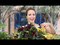 Floresta de parede: transforme uma moldura em jardim! - YouTube Natural, Carol Costa, Youtube, Ohana, Toque, Green, Plants, Interior, Potted Garden