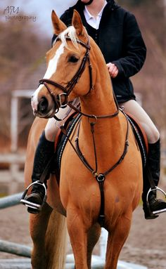 I love to ride English! Just so comfortable and balance is everything on an English saddle!