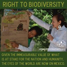 Monsanto's seeds are temporarily banned in Mexico. But its influence and corruption have infiltrated the Mexican government and forced the Mexican people to fight for the health of their country and the protection of native seeds.   #MonsantoMakeUsSick #Mexico #Ag #GMO