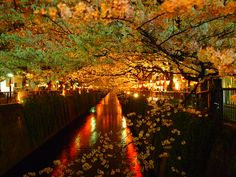 Meguro river with cherry blossom