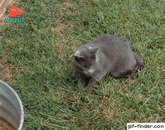 Chipmunk hides on cat's back