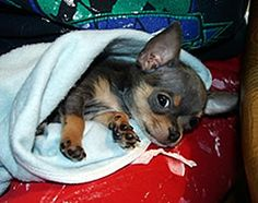 10 Tips For Small Dogs 20 lbs and Under