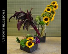 Summer Sunflowers for the Hotel Captain Cook
