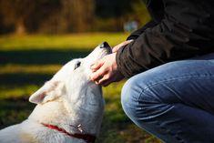 La relación entre los perros y sus dueños suele caracterizarse por la existencia de unvínculoespecial que los hacen únicos