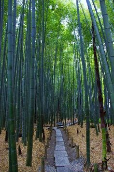 Hokokuji Temple (Takedera Temple): 竹の庭