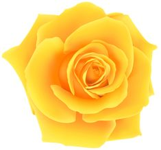 Rose PNG image with transparent background Flower Clipart Images, Flower Art Images, Rose Clipart, Orange Roses, Purple Roses, Yellow Flowers, Sunflower Clipart, Transparent Flowers, Rose Stem