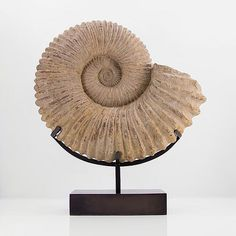 Our latest surmounted bronze based ammonite to be listed o… | Flickr