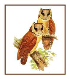 Naturalist John Audubon/'s Screech Owl Family  Counted Cross Stitch Chart Pattern