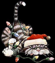 Plaatjes kerst katten     plaatje. Plaatjes kerst katten     opslaan of reageren. Plaatjes kerst katten     Plaatje delen op Facebook, Whatsapp en Twitter. Of doorlink codes voor profiel websites en blogs.