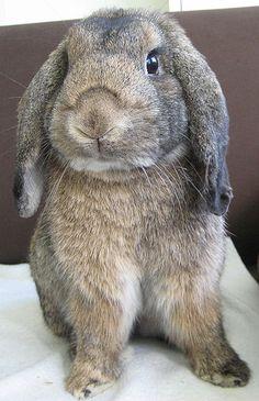 GASP~ Hunny Bunny!!!