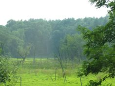 A beautiful field off the way in Gill/Northfield, Massachusetts. © by Brandy Brow.