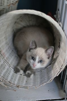 This feline friend would like some goodies in that basket with it. Come check out our kitty basket!!