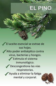 Beneficios del aceite de pino