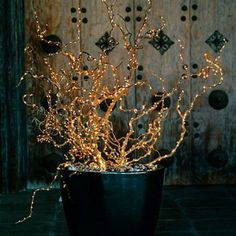 Twisted willow or contorted hazel strung with twinkle lights aren't just for christmas and last well into January