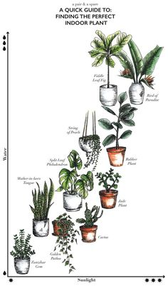 Get tips on all types of houseplants with our guide.Get tips on all types of houseplants with our guide. for guide plant garden indoor sunset FINALLY learn which houseplants you can keep Jade Plants, Cactus Plants, Silk Plants, Green Plants, Cacti, Plantas Indoor, Decoration Plante, Green Decoration, Natural Home Decor