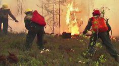 """Seit Monaten herrschen in Sibirien anormal hohe Temperaturen und versetzen die Region in einen Ausnahmezustand. Der Permafrost schmilzt, Infrastruktur birst, Wälder gehen in Flammen auf. """"Die Arktis brennt"""" titelte unlängst die Nachrichtenagentur Associated Press. Die Forschung kennt die Ursache dafür und schlägt Alarm. Painting, Arctic, Research, Paintings, Draw, Drawings"""
