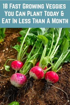 18 Fastest Growing Veggies You Can Harvest In No Time Plant these today and you could be eaitng them Vegetable Garden Planner, Veg Garden, Edible Garden, Lawn And Garden, Vegetable Gardening, Garden Beds, Growing Veggies, Planting Vegetables, Growing Plants