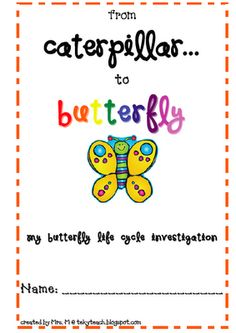 Life Cycle- Butterfly
