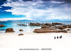 Shop Great Ocean Road Australia Wallpaper in Coastal Landscapes Theme Beaches In The World, Countries Of The World, Best Beach In Aruba, Australia Wallpaper, Vacation Images, Boulder Beach, Beach Wallpaper, Sand And Water, Beach Walk
