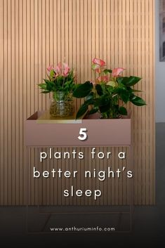The 5 plants that help you sleep better! Because more and more people are suffering from sleeping problems. There are various reasons for this, but have you ever considered the air quality in your bedroom? Opening a window from time to time is a good idea, but some plants can help you get a better night's sleep too. Here are five plants that help you sleep better.   anthurium - houseplants - house - indoor - bed Beautiful Flowers Pictures, Flower Pictures, Indoor Garden, Indoor Plants, Meditation Room Decor, House Plant Care, Beautiful Interior Design, Exotic Plants, Pool Designs