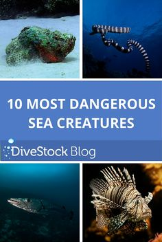 Ever wondered what kind of sea creatures you should not provoke? Check out who made it into the top Predator Hunting, Sea Creatures, Underwater, Shark, Blog, Sharks, Blogging