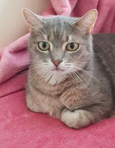 Katzen machen Menschen nicht nur glücklich, sie tun auch unserer Gesundheit gut! Ihre wohltuende Wirkung ist mittlerweile wissenschaftlich bewiesen! Cats, Animals, Pet Dogs, Counseling Psychology, Pets, People, Health, Gatos, Animales
