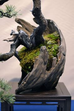 Garden art of Bonsai is one of my favorite topics to search for online and create in person. I am a ceramic artist and create Bonsai P. Bonsai Plants, Bonsai Garden, Air Plants, Cactus Plants, Moss Garden, Garden Pots, Ikebana, Bonsai Making, Bonsai Tree Care