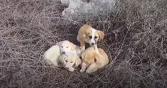 Cute Gif, Polar Bear, Adoption, Strong, Puppies, Running, Couples, Animals, Awesome