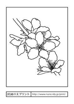 モモの花・桃の花(主線・黒)/岡山県の花/無料塗り絵/都道府県【ぬりえプリント】