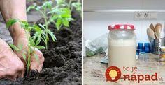 Potrebujete len 1 surovinu z vašej domácnosti, ktorú však bežne používate na celkom iné účely, ako na starostlivosť o rastliny.
