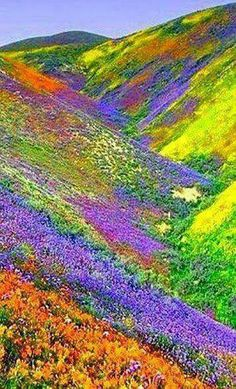- Valley of Flowers - Himalayas of the Uttaranchal, India. More - Valley of Flowers - Himalayas of the Uttaranchal, India. More Valley of Flowers - Himalayas of the Uttaranchal, India. Beautiful World, Beautiful Places, Beautiful Pictures, Amazing Photos, Nature Pictures, Valley Of Flowers, Death Valley Wildflowers, Belle Photo, Amazing Nature