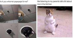 Welcome everyone! Another blessed Caturday is upon us and we all know what that means! Wait no -- memes! Funny Animal Memes, Cute Funny Animals, Funny Dogs, Funny Memes, Funny Horses, Jokes, Hilarious, Silly Cats, Cats And Kittens